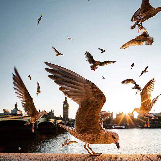 информация птицы над городом буду мере
