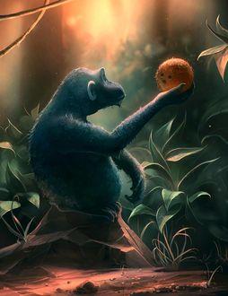 Фото Шимпанзе держит апельсин, by Cyril ROLANDO