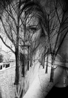 Фото Портрет девушки на фоне деревьев вдоль улицы, by Emma Silk