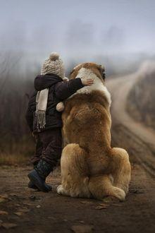 Фото Ребенок обнимает большого пса и они вместе смотрят вдаль