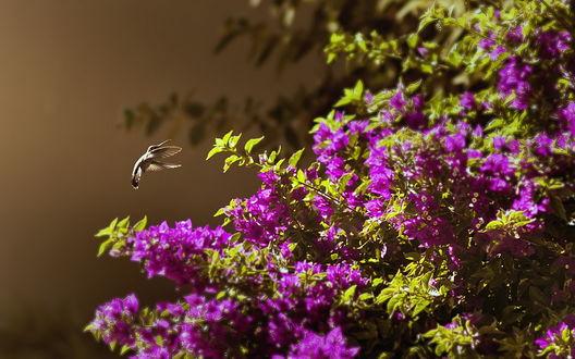 Фото Застывший полет колибри у цветущего куста