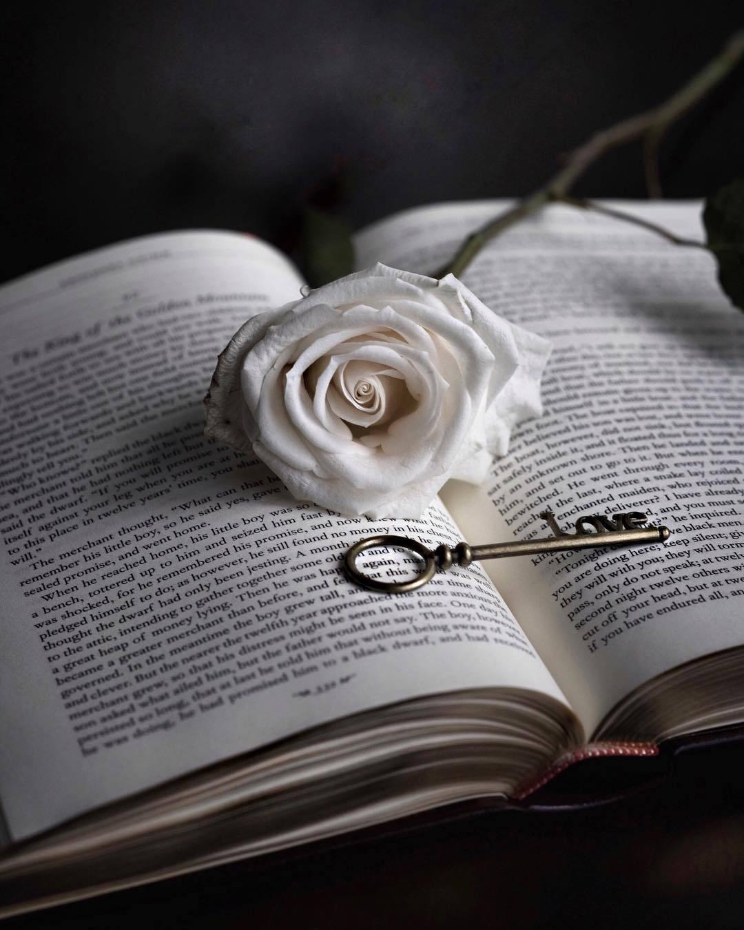 Картинки с черными розами и книгой