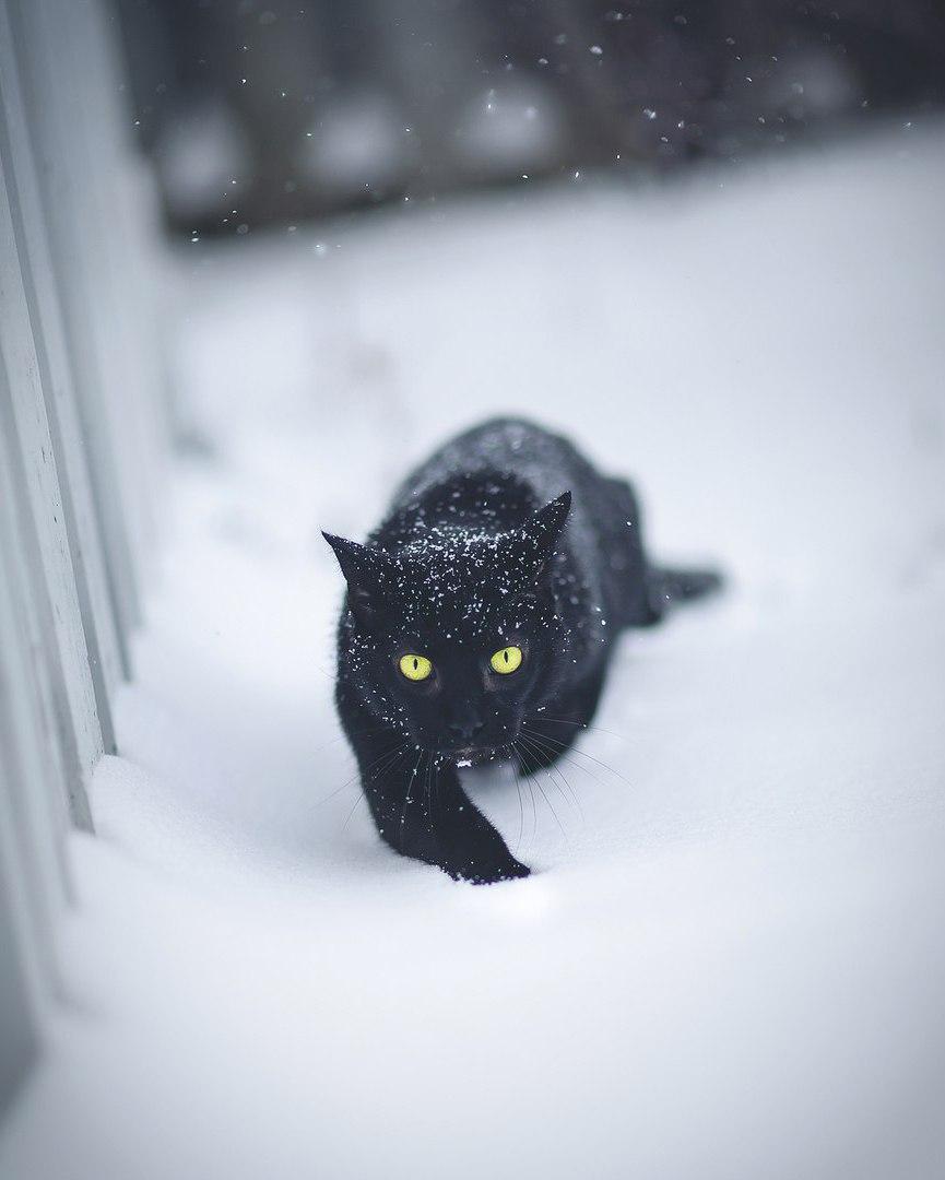 бьюти картинка черная кошка в снегу максакова уже долгое