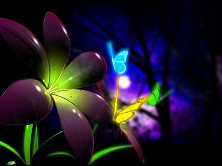 Фото Разноцветные бабочки у цветка в ночном лесу