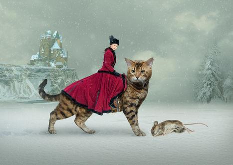 Фото Работа Мышиная охота. Фотограф Oleg48