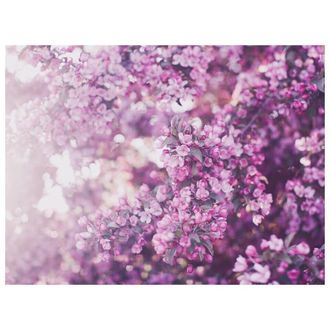 Фото Цветущие ветки яблони в солнечных бликах