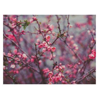 Фото Цветущие ветки японской айвы на сером фоне