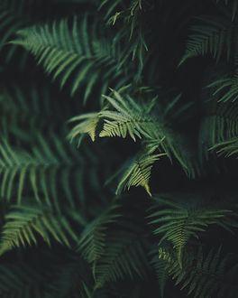 Фото Зеленые листья папортника