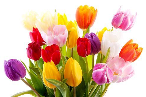 Фото Букет красивых тюльпанов