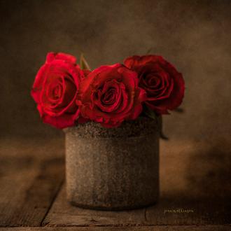 Фото Красные розы в вазе, by Joan