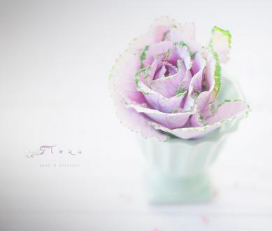 Фото Сиреневая нежная роза в чашке, by Joan