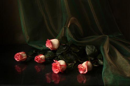 Фото Бело-розовые розы на гладкой поверхности, художница Юлия Медведева