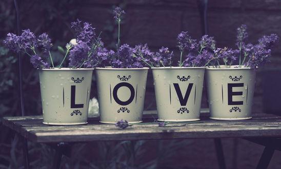 Фото Лаванда в ведерках с буквами на них, (Love / любовь)