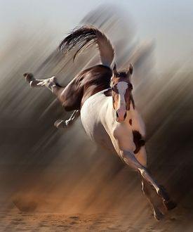 Фото Пятнистая лошадь в беге
