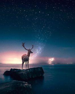 Фото Олень стоит на камне в окружении воды на фоне ночного неба, фотограф Ronald Ong / Рональд Онг