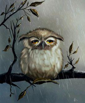 Фото Сова сидит на ветке дерева под дождем