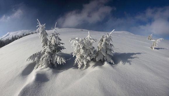 Фото Деревья засыпаны снегом