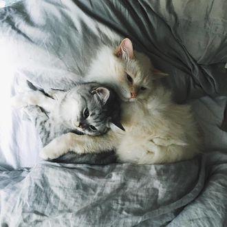 Фото Два обнимающихся кота на постели