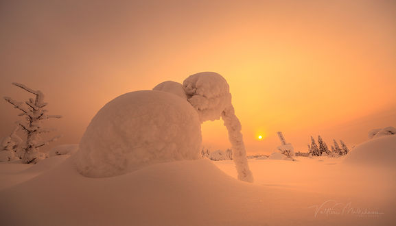 Фото Снежный слон на фоне заката, фотограф Valtteri Mulkahainen
