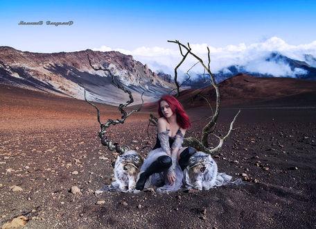 Фото Девушка и два больших кота сидят на пустынной земле, Малышев Владимир