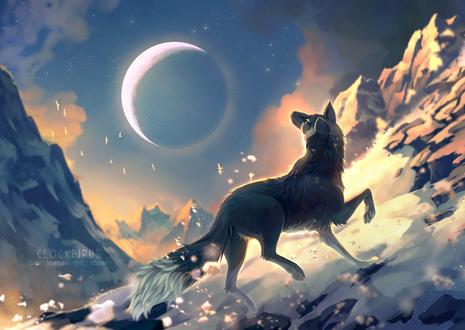 Фото Волк, стоящий на снегу, смотрит на небо, by clockbirds