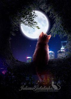 Фото Кошка сидит на фоне полной луны, by Julianagatatinha Silva