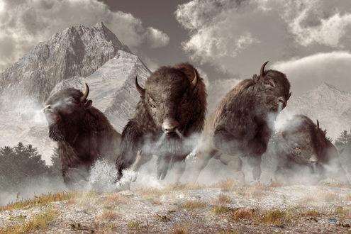 Фото Несущееся стадо бизонов, by deskridg