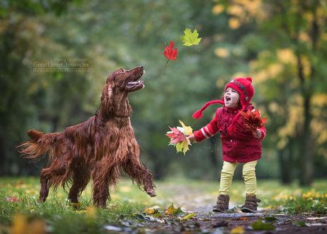 Фото Девочка и ирландский сеттер играют осенними листьями в парке, фотограф Андрей Селиверстов