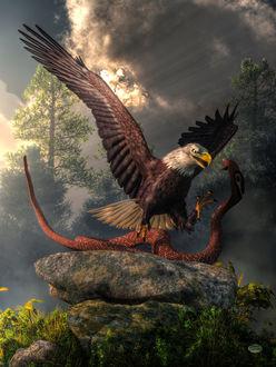 Фото Битва орла и кобры, by deskridg