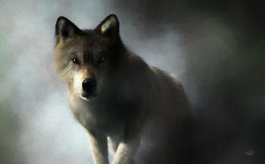 Фото Волк, окутанный туманом, by deskridg