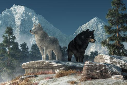 Фото Белый и черный волки на фоне заснеженных гор, by deskridg