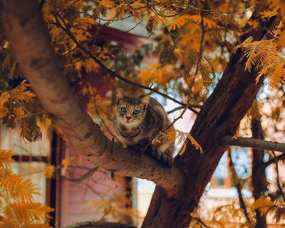 Фото Котенок с голубыми глазами сидит на дереве