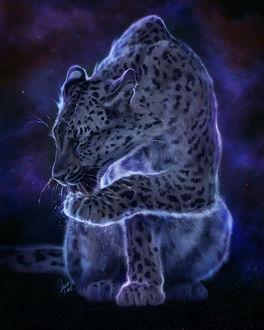 Фото Леопард в космосе, by TamberElla