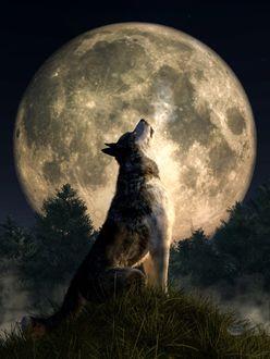 Фото Волк воет лунной ночью, by deskridg