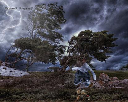 Фото Девушка и собаки идут против сильного ветра по лесу, Малышев Владимир