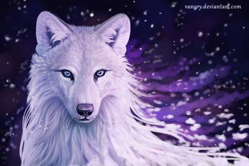 Фото Белый волк с голубыми глазами, by Vanory