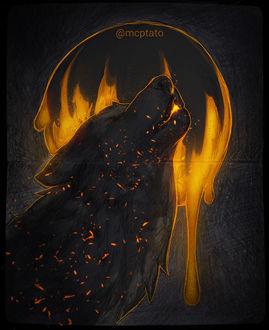 Фото Воющий волк, by mcptato