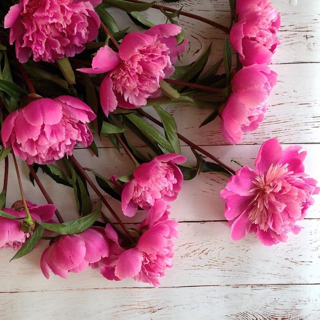 Розовые пионы на дощатой поверхности