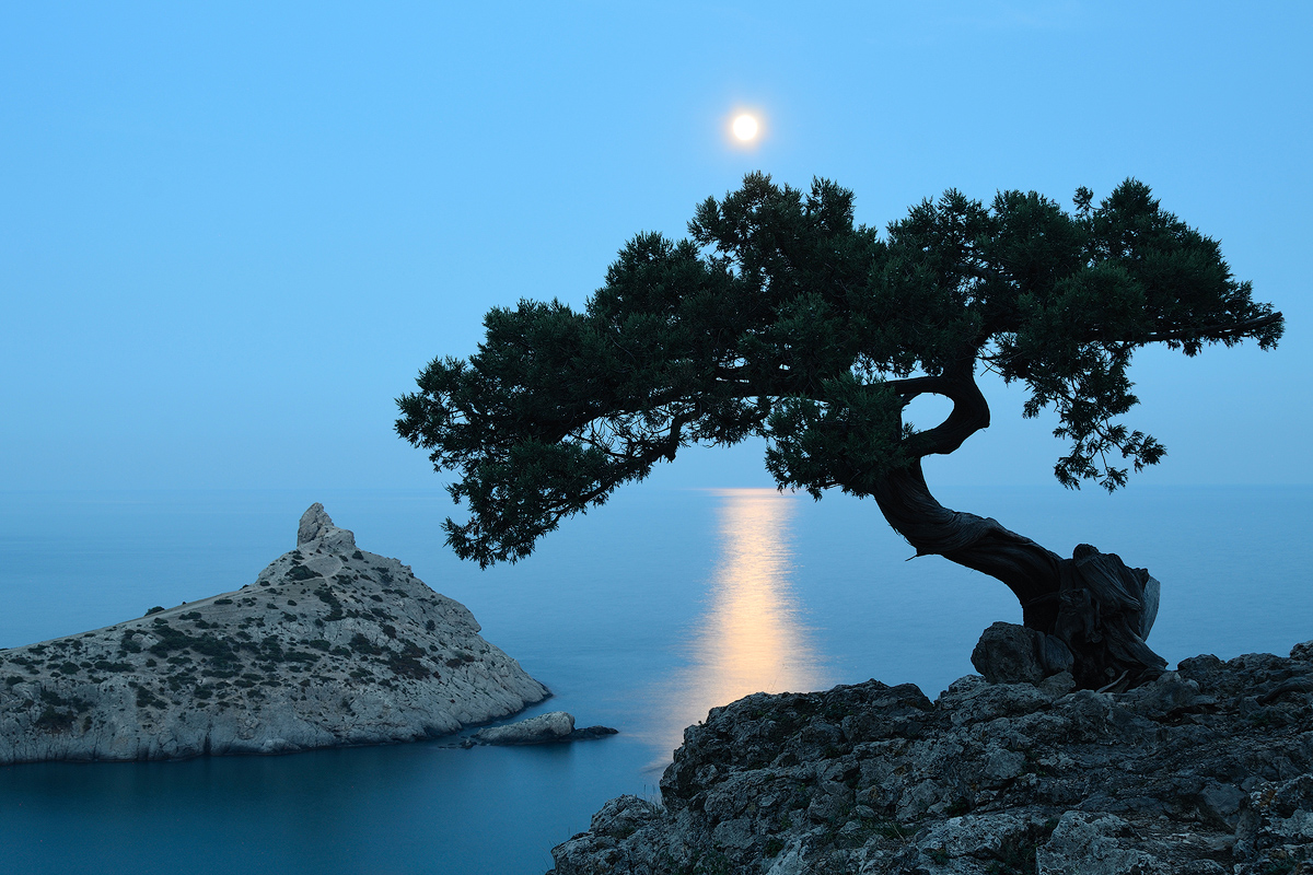 преимуществами картинка дерево на скале устроить фотосессию