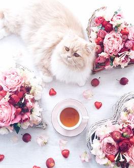 Фото Кошка лежит рядом с букетами и чашкой с чаем, by atelierjuno