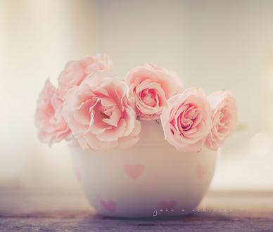 Фото Розы в чашке