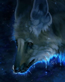 Фото Морда волка с каплями воды, by TamberElla