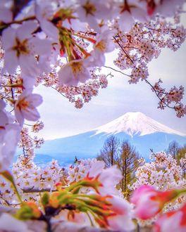 Фото Вид на гору Fuji, Japan / Фудзи, Япония