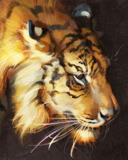 Фото Рисованный тигр, by TamberElla