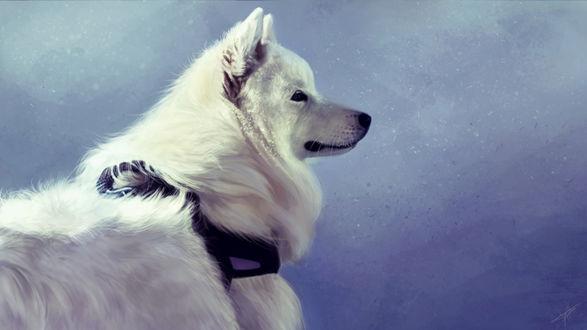 Фото Белый пес на голубом фоне, by Tyfflie