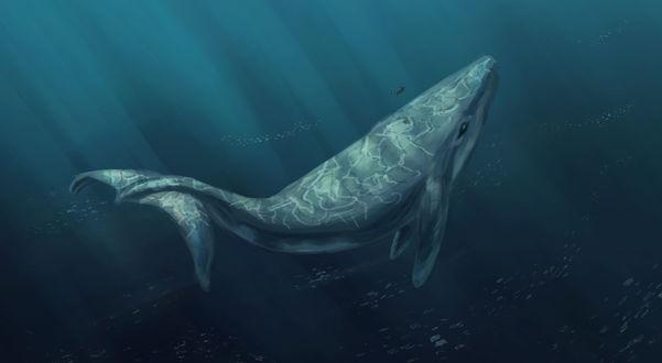Фото Дайвер и кит под водой, by Tyfflie