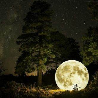Фото Луна лежит в траве