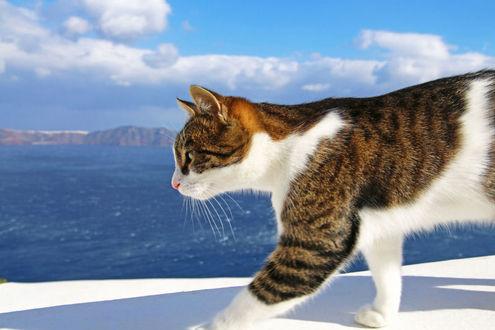 Фото Кошка на фоне моря и облачного неба