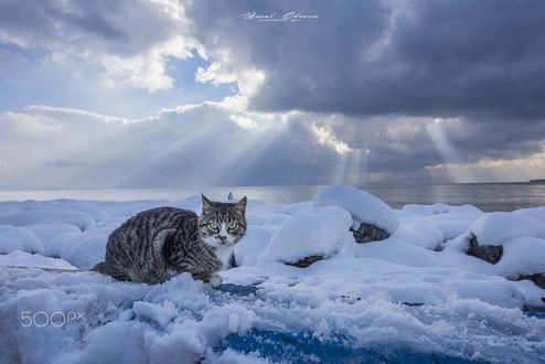 Фото Кошка на снегу. Фотограф Unsal Odemis