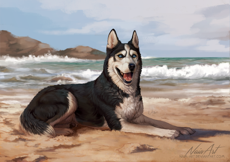 Фото Хаски лежит на берегу моря, by Naia-Art